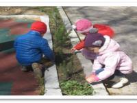 Экологические акции - активные формы работы по формированию экологического сознания дошкольников.